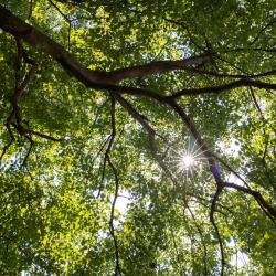 Der Lindenbaum mit seiner heilsamen Energie beschirmt die Praxis